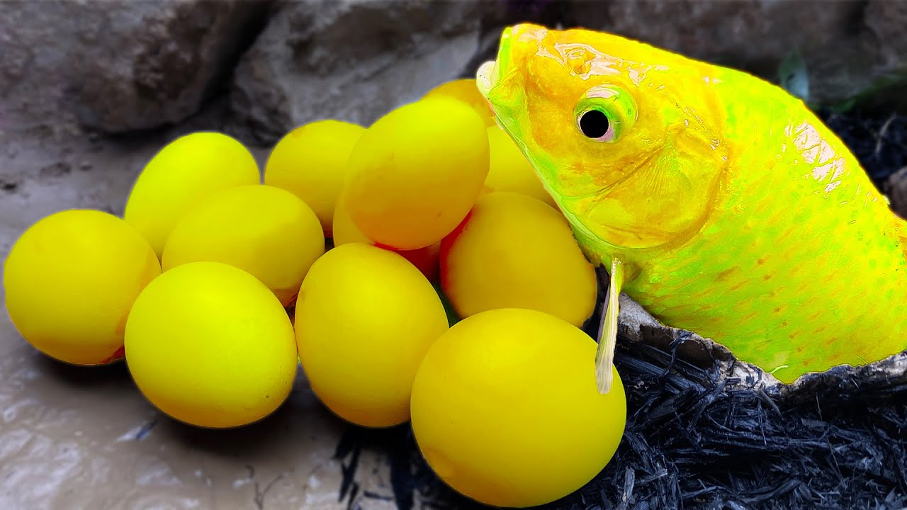 Fishing Koi Fish Eggs Mud Pit | Turtle and Octopus colorful eggs Funny Video - Stop Motion ASMR