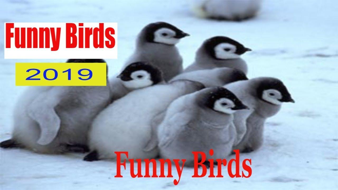 Funny Bird 2019 | Cute penguinFunny Birds 2019 | Funniest parrot