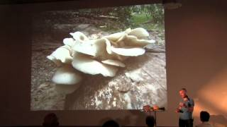 Mushrooms for Backyard Medicine: Tradd Cotter from Mushroom Mountain