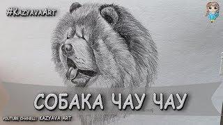 Как нарисовать собаку порода ЧАУ ЧАУ карандашом. Рисую голову. (01.05.2019)
