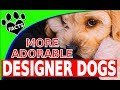Designer Dogs 101: Today's Top 10 Most...