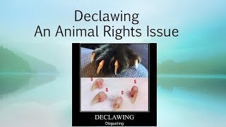 Anti-declawing Presentation by Roberto Bonelli at 2018 Anti-Fur Society Conference
