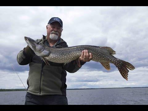 Big Pike Of Kesagami Lake   Ontario