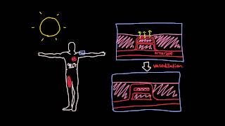 Thermoregulation in the cardiovascular system