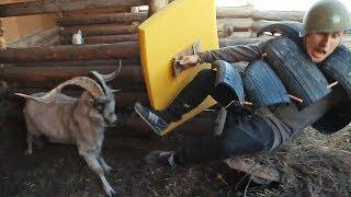 Бараны атакуют: Один на один с быком