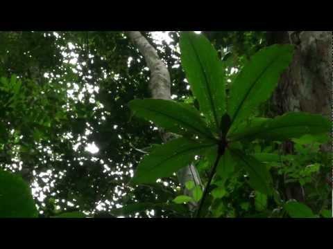 Le Bassin du Congo: L'Etat des Forêts