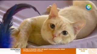 В Санкт - Петербурге пройдет выставка семейства кошачьих. Эфир от 20.10.17