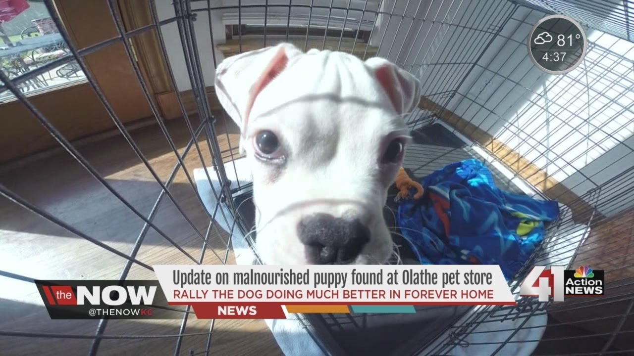 State makes Olathe pet store change standards after skinny pup found, saved
