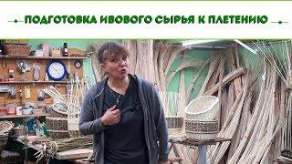 Русская ива. Видео обзор. Подготовка ивового сырья к плетению.