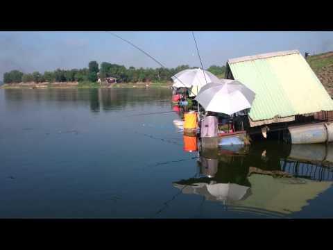 Cá Phi Sông Mây đang bão,  cá lên đều hồ :-D