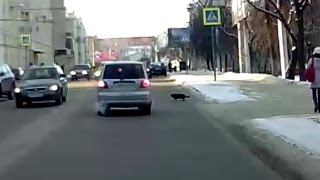 Кот на пешеходнике