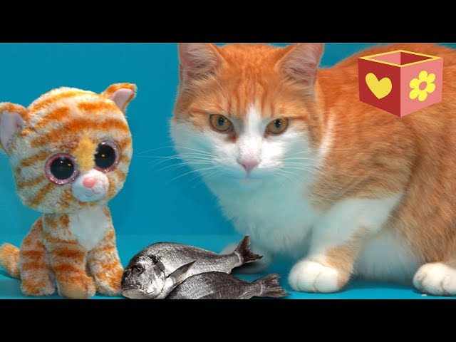 Cute cat part three | Bellboxes | Video for children