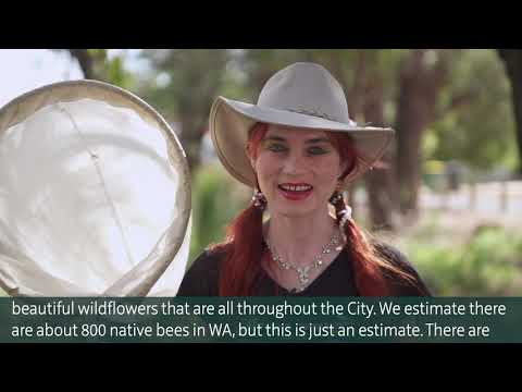 CitSciOzOnline: Innovation in Citizen Science - Native bees in the City of Kalamunda