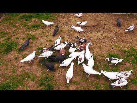 Как отучить голубей от соседских крыш, проводов, деревьев!?