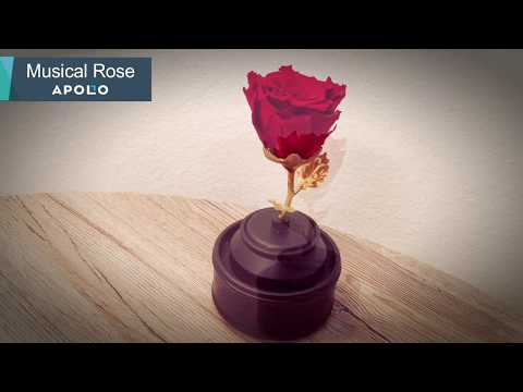 Musical Rose - A Lasting Romantic Gift