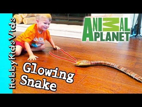 Animal Planet SNAKE Toy PLAY Review! Snake + Remote Control HobbyKidsVids