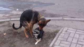 собака долбит воздух