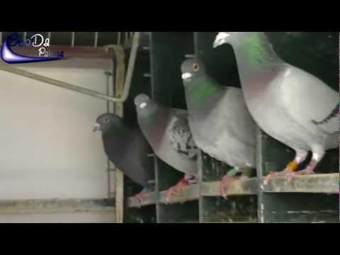 Pigeon loft Fernando Suàrez / Taubenschlag Fernando Suàrez / Palomar Fernando Suàrez (2012)
