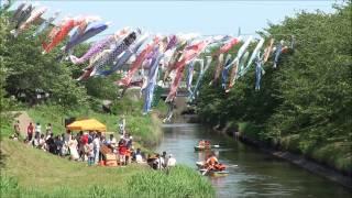 矢那川 鯉のぼり祭り (千葉県木更津市) 2012年5月5日