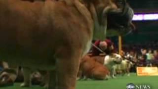 Health Of Pedigree Dogs