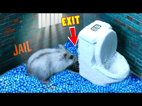 🐹🦂Scorpion maze with Traps hamster Police Pets🐹 in Hamster Stories