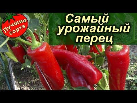 Самый Урожайный Перец 2018 г. - Duga Bela (лучшие сорта сладкого перца)