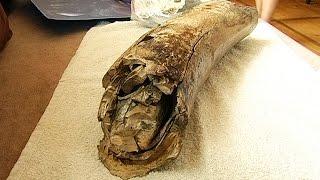 На Коломийщині під час копання криниці знайшли рештки мамонта!