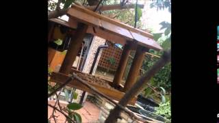 British Birds At New Bird Feeder Uk (robin, Great Tits, Blue Tits & Coal Tit) (29th October 2014)