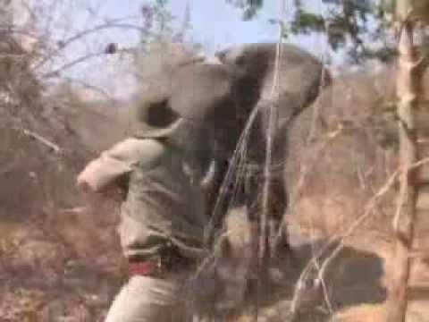 Hunting elephants of Africa