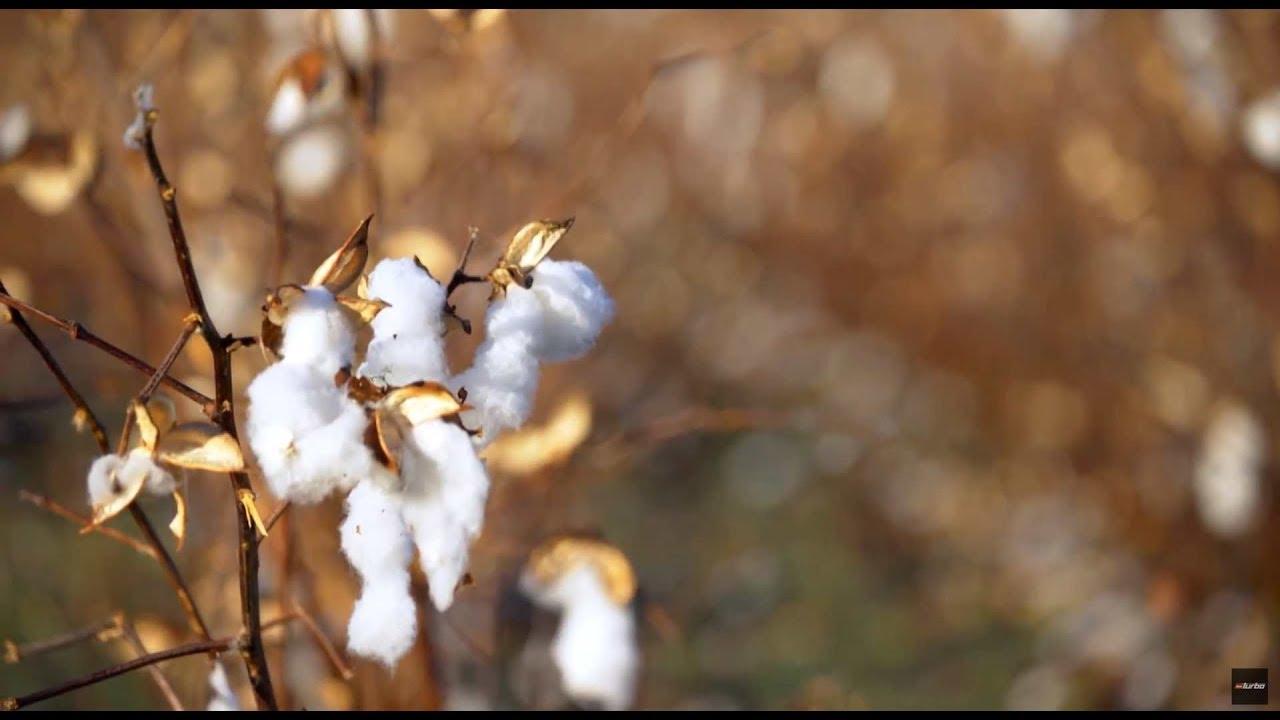 Pola bawełny, na które lepiej nie wchodzić bez pytania! #Ciężarówką_przez_Stany