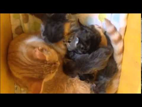 Henry Fosters Tiny Kittens
