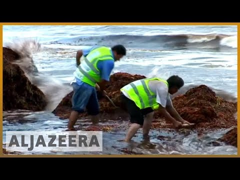 🇺🇸 Red tide: Toxic algae bloom plagues Florida's coastline | Al Jazeera English