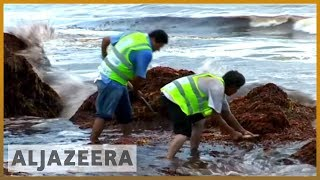 🇺🇸 Red tide: Toxic algae bloom plagues Florida's coastline | Al Jazeera English