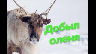 Охота на дикого оленя в Якутии 2020