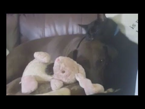Cat Sleeping Against Dog's Head