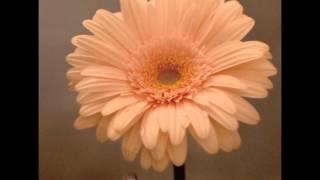雑誌「ocarina vol6」とオカリナ楽譜配信サイト「おとタマ」(http://oto...