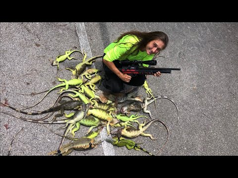 .22 Cal Pcp Air Rifle Iguana Hunting !!