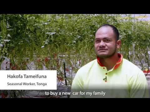 """I'll build a new house for my family"": Pacific Seasonal Workers Share Their Story"