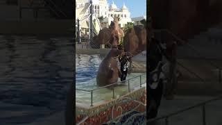 Walrus playing saxophone