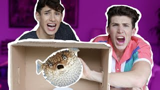 EXTREME What's In The BOX Challenge!! (HE BLEEDS)