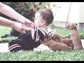 Puppies and babies cutest friendship in the world - Puppy and baby best friends grow up together