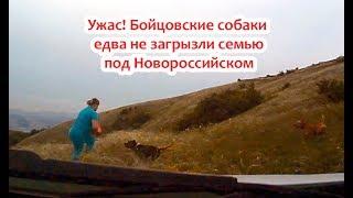 Ужас! Бойцовские собаки едва не загрызли семью под Новороссийском 21.05.2019