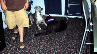 2012 2-7 The Best Buddy Ever Tribute Durango France R.i.p. Great Dane (13yrs Old) Video