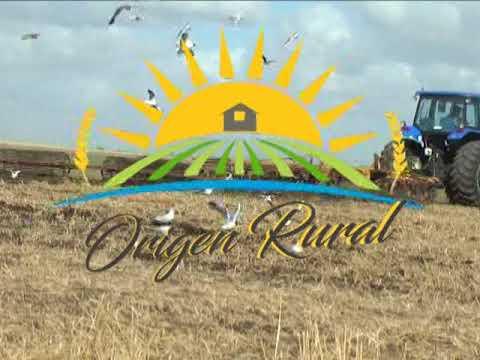 Origen Rural N° 43       17   9   17