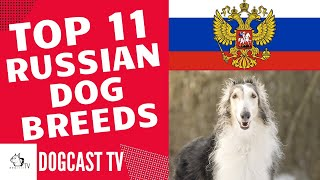 RUSSIAN DOG BREEDS TOP11!  DogCastTV
