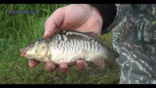 Шедевральная рыбалка на карпа, или отчет как я ловил карпа на удочку и фидер (донка).