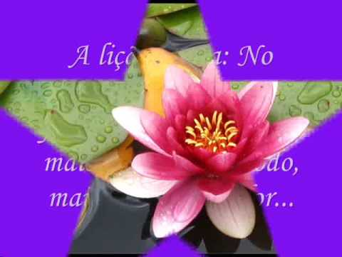 Flor de Lotus