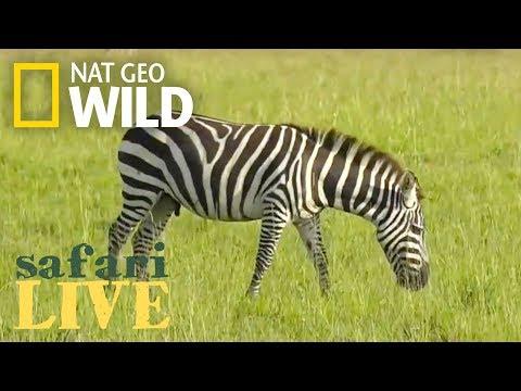Safari Live - Day 83 | Nat Geo WILD