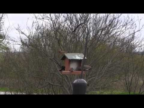 Mitchell Lake Audubon Center Bird Feeder