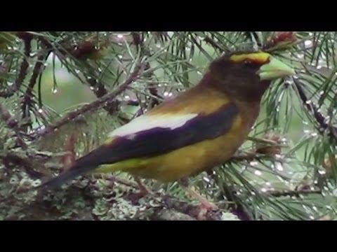 Bob Marshall Expedition Montana Soundtrack Birds Singing Water Wildlife Nature Sounds
